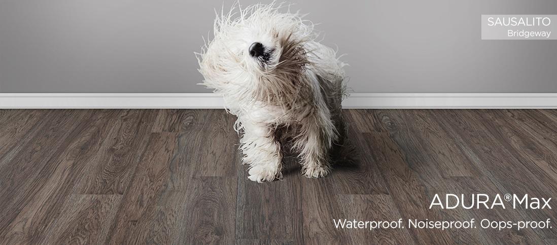 white dog shaking off water